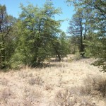 Land for Sale Forest Ridge Subdivision